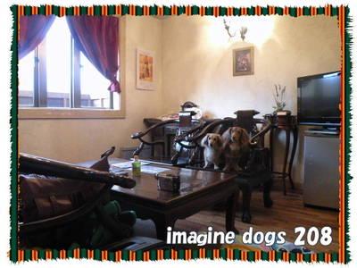 Imazine_dogs_3